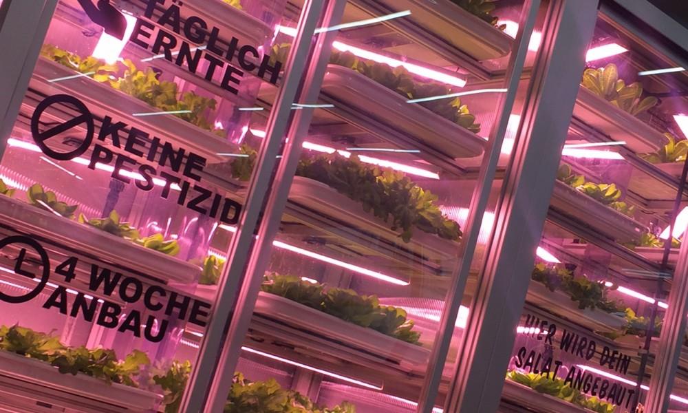 Frischer Salat mit Technologie-Topping